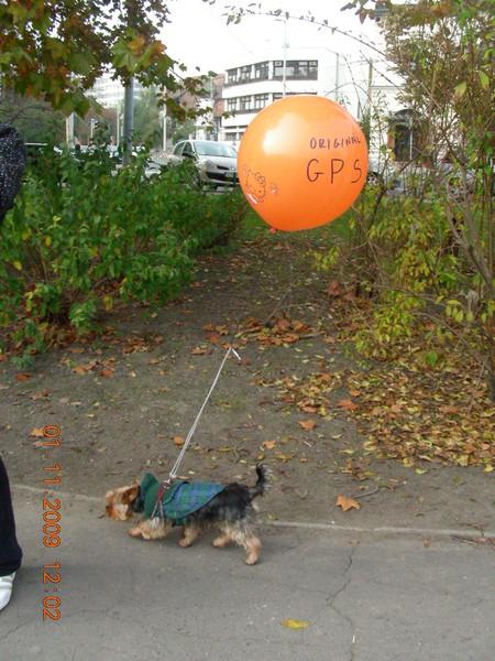 Фото Своеобразный GPS навигатор. Будапештские шутники