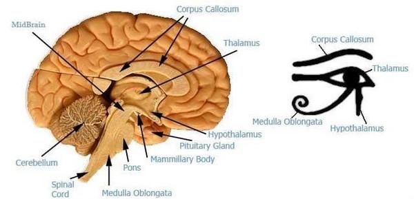 Синхронизация Активация Включение Мозга