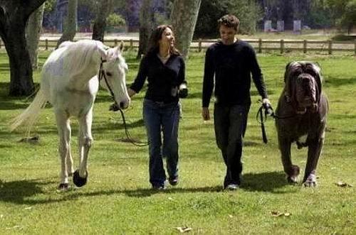 Какая порода собак самая большая
