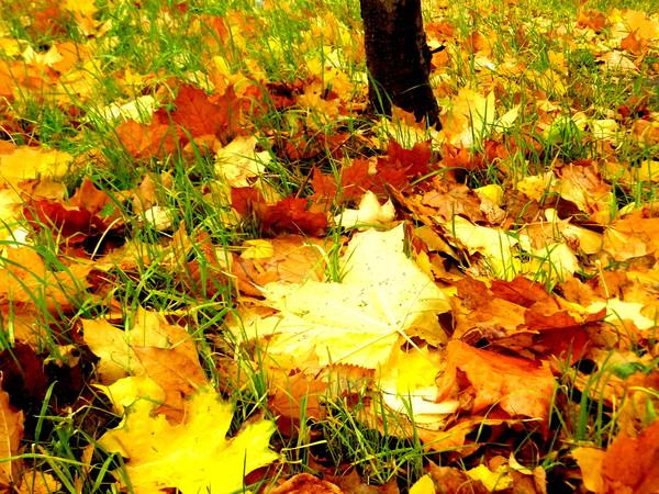 Осенние  пейзажи - Страница 2 I-3819