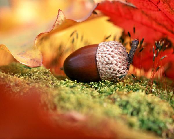 Осенние  пейзажи - Страница 2 I-134