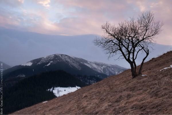 Фото Гора и древо. Юрий Ольш