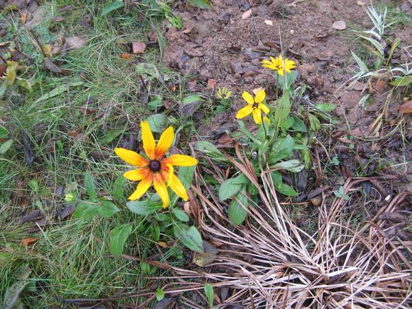 последние цветы