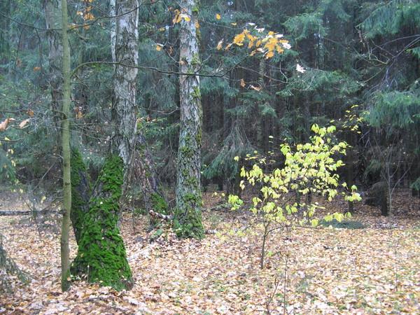 лес через дорогу