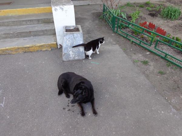 http://content.foto.mail.ru/mail/lll22021918-01/_blogs/i-20.jpg