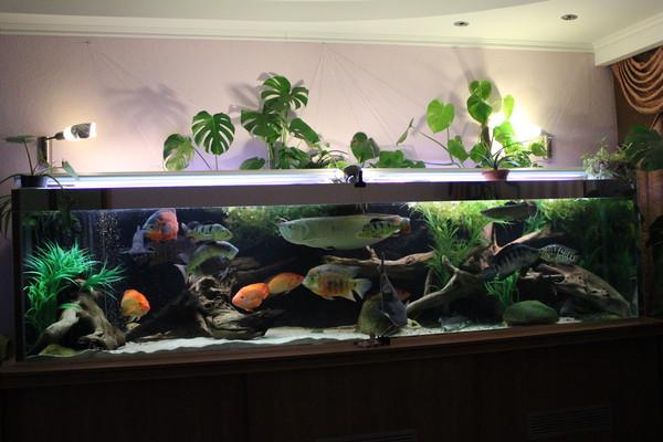 Фотографии дизайнов грунта в аквариуме
