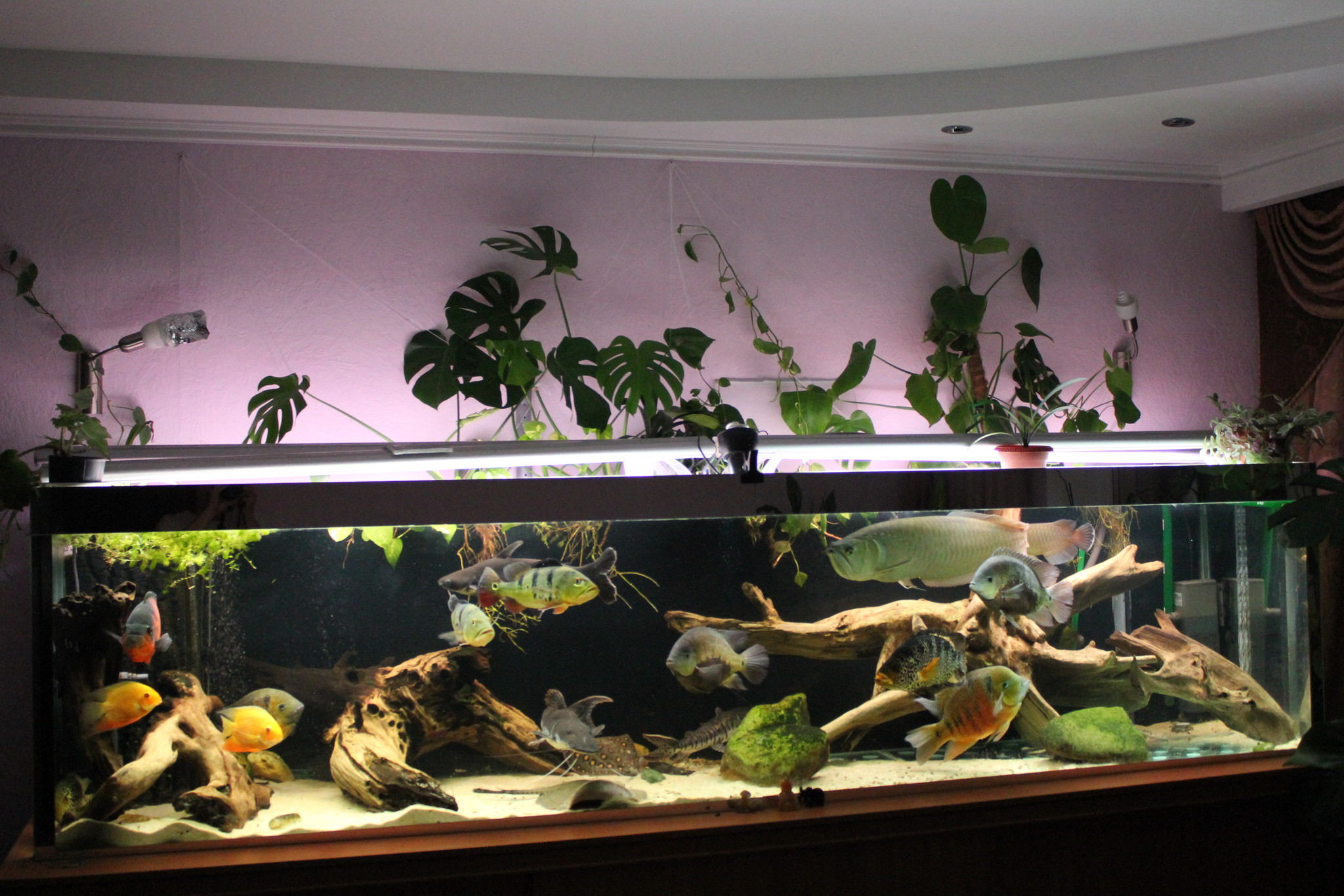 1000 images about fish tank planter on pinterest for Fish tank planter