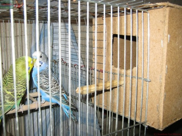 Гнездо канареек своими руками