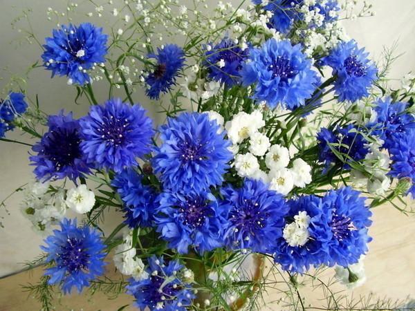 Цветы цветы удачи счастья и надежды