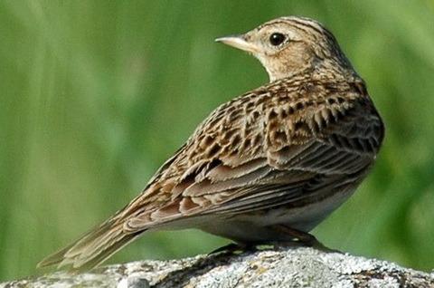 находится также в галереях: птицы ленинградской области