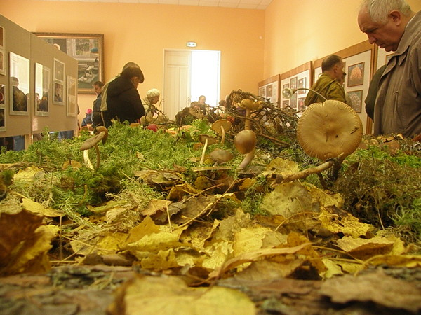 В Ботаническом саду Санкт-Петербурга проходит ВЫСТАВКА ГРИБОВ