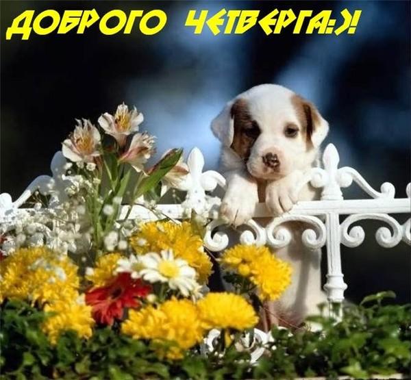 http://content.foto.mail.ru/mail/malinin.mary/3d-galleru.ru/s-13510.jpg