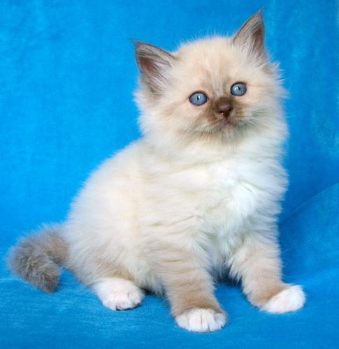 Котик Умка