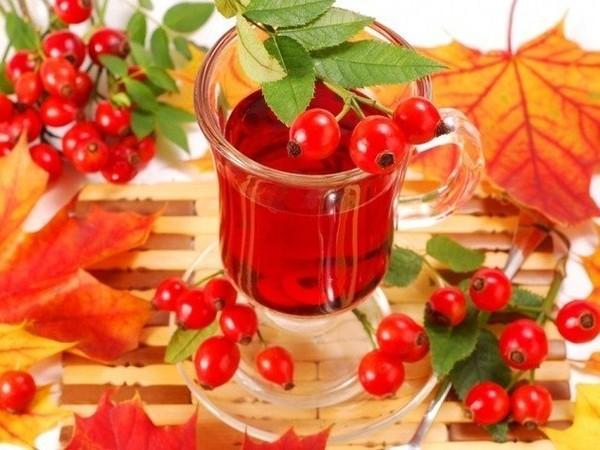 Польза чая из шиповника для организма
