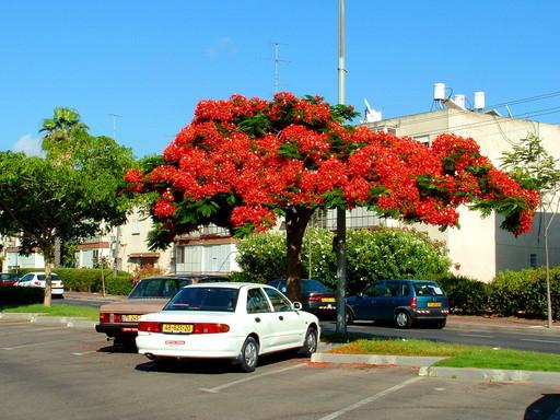 Комнатные цветок похожий на дерево с 77