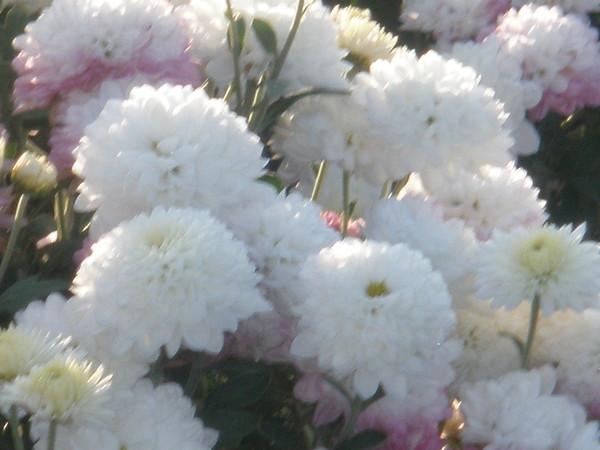 Записи фото цветы любимой цветы