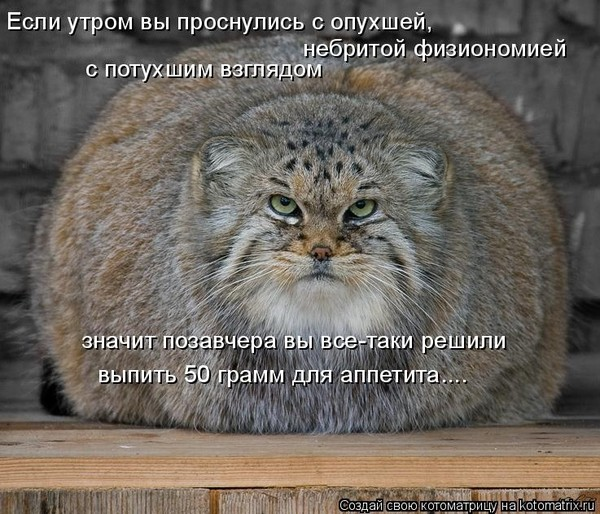 http://content.foto.mail.ru/mail/mayasedn78/_blogs/i-680.jpg