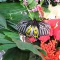Музей бабочек рядом с городом Пхукет