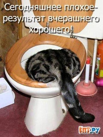http://content.foto.mail.ru/mail/monavtbuh/49/i-195.jpg