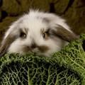 Формат А4 Скачать и распечатать календарь с кроликом на 2011 год.