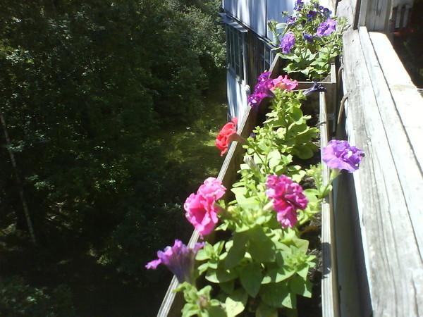 Нужно ли в балконных ящиках для цветов проделывать дырки на дне.  Или керамзита насыпать? (в ящиках есть боковые...