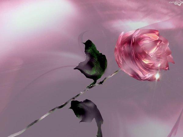 Фото роза