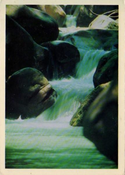 Венесуэла Национальный парк Мочима 1992