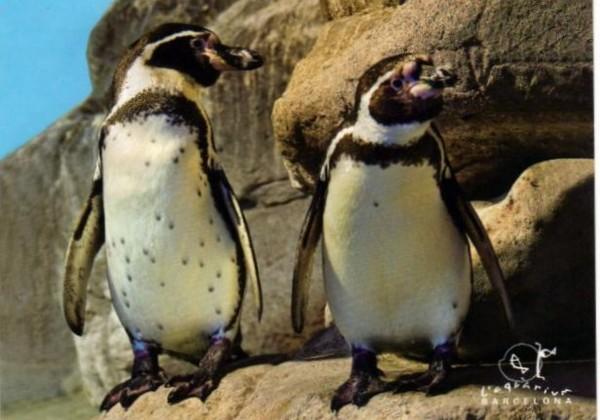 Пингвины Аквариум Барселоны 2012-001