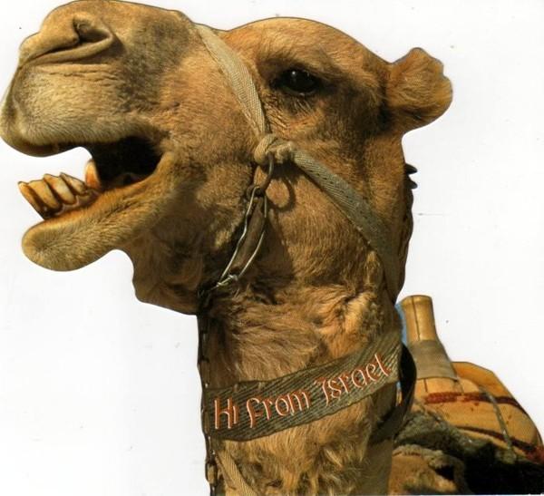Верблюд. Привет из Израиля. 2012