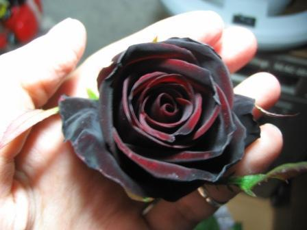 К чему снятся розы (красные, белые, розовые, чёрные и)
