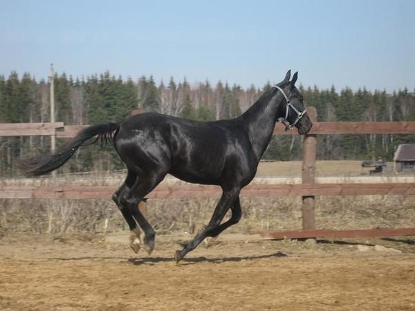 год лошади под знаком скорпиона