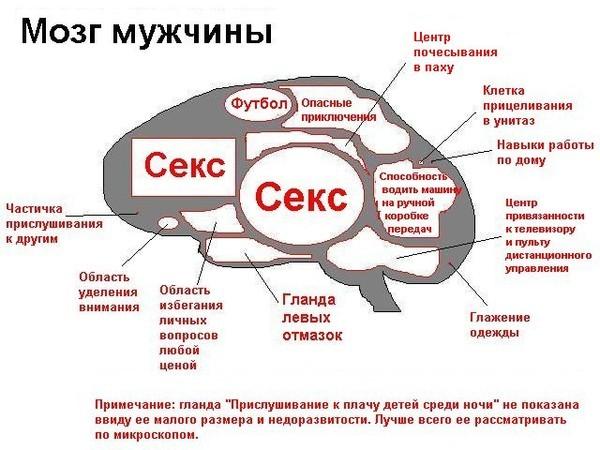 Фото Мужской мозг