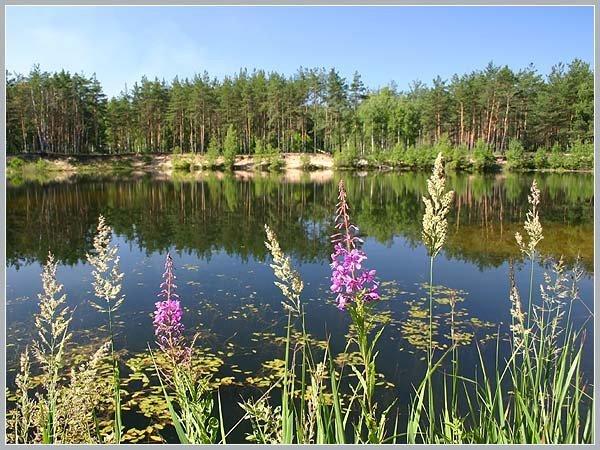 Лесное озеро. Фото/b. Красивые пейзажи.