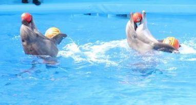 В Судаке есть новый дельфинарий «Немо»