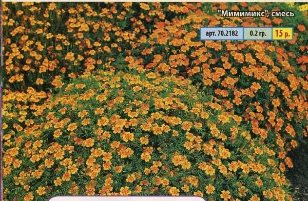 Какие однолетние цветы самые