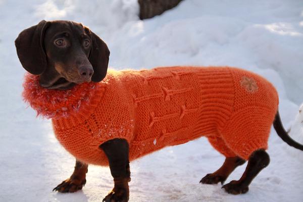 Вяжем кофту для собаки на спицах