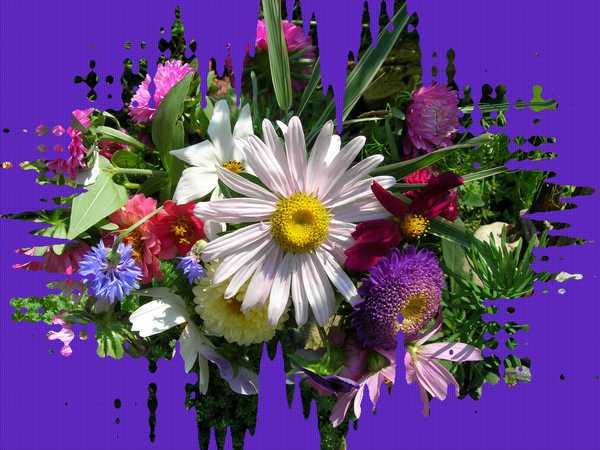 http://content.foto.mail.ru/mail/ognisko_super/kwiaty/i-488.jpg