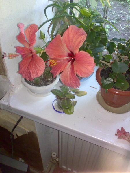 Что это за цветок и как размножается