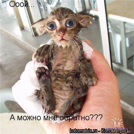 http://content.foto.mail.ru/mail/oljgachik/231/i-292.jpg