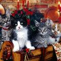 Купить сиамскую кошку в Иваново.