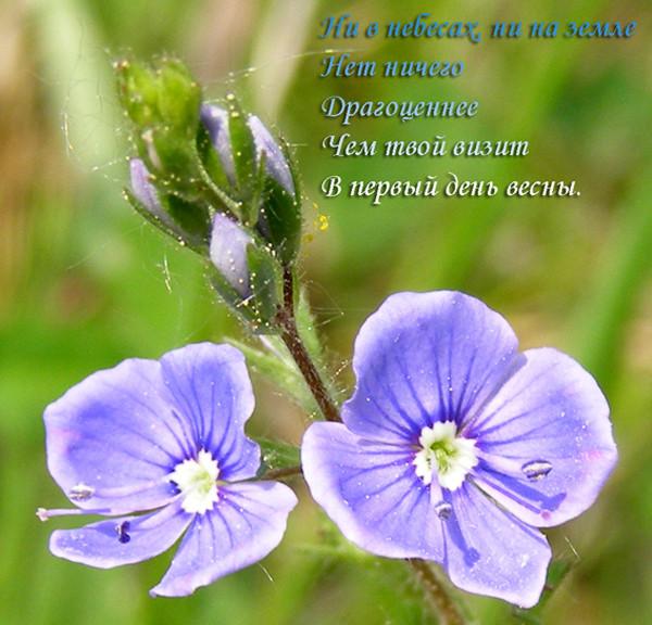http://content.foto.mail.ru/mail/oshoworld_info/247/i-480.jpg
