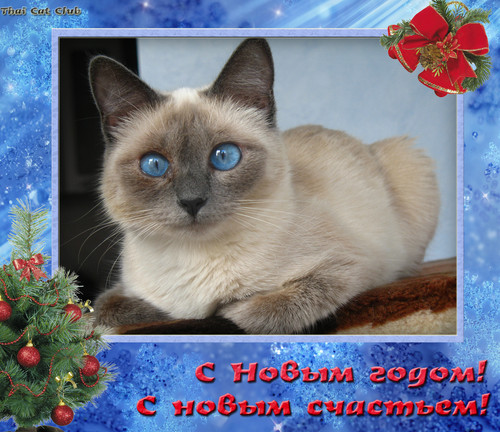 """Recent posts.  Рассылка  """"Тайские кошки """".  Котики и кошечки - вышивка Маргарет Шерри, схемы.  Коты - Божьи создания."""