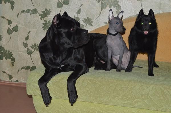 Угадаете породы собак на фото