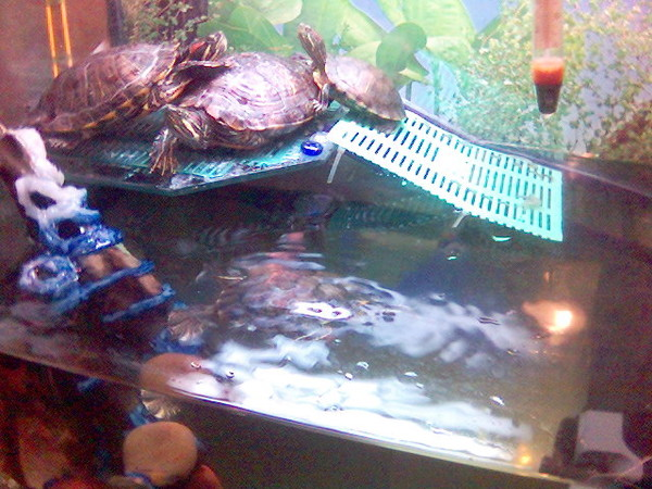 Плот для черепахи своими руками