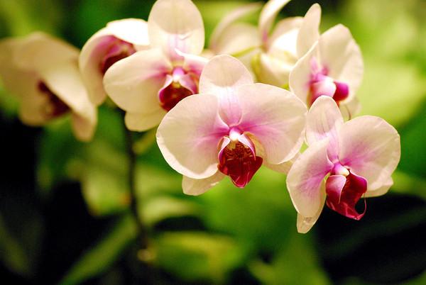 Засохли и опали цветы у орхидеи