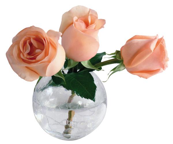 Как сохранить срезанные розы в вазе надолго