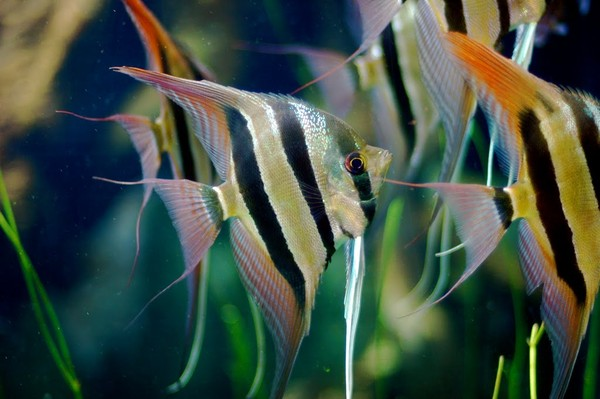 Mail ru for Freshwater fish representative species