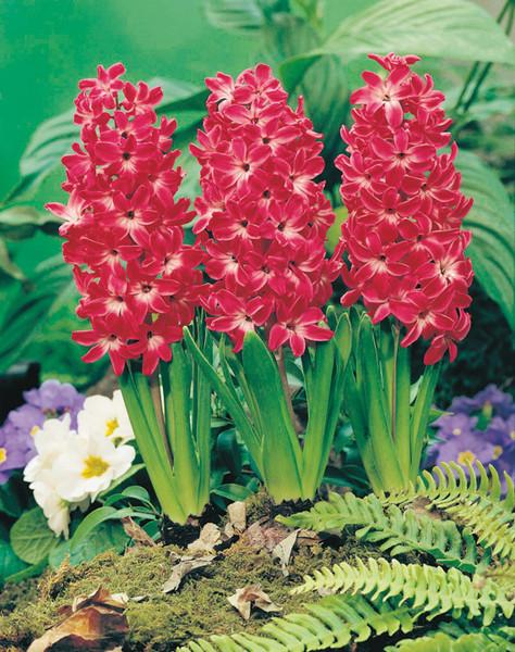 Очаровательный весенний первоцвет