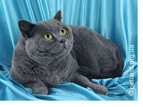Проплан для кошек цена Ставрополь.