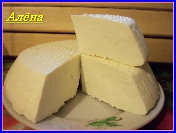 Козий сыр с пепсином в домашних условиях 702